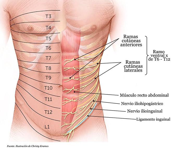 Causas dolor pared abdominal